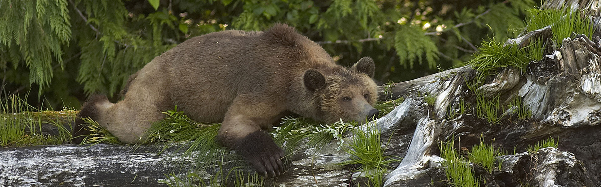 Wilderness Lodges and Wildlife Experiences in Canada