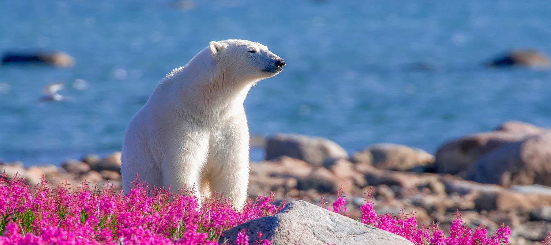 Canada By Design Vacations | Discover Churchill