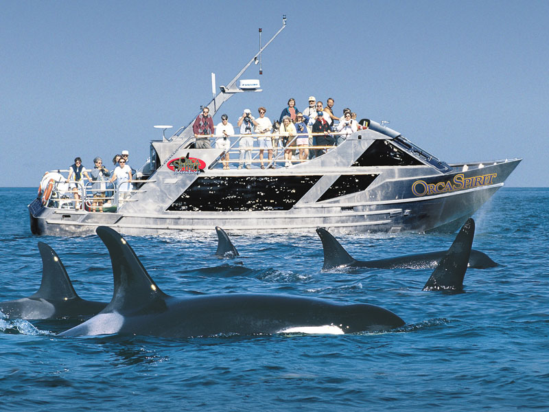 Victoria with Whales and Floatplane Package | Victoria Whale Watch Cruise