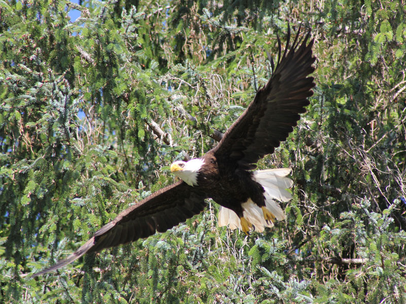 Vancouver Island Road Trip | Bald Eagles Knight Inlet Lodge