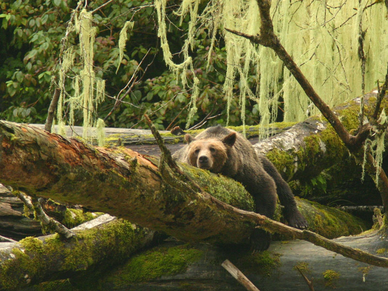 Grizzly Bears & the Canadian Rockies Train Vacation