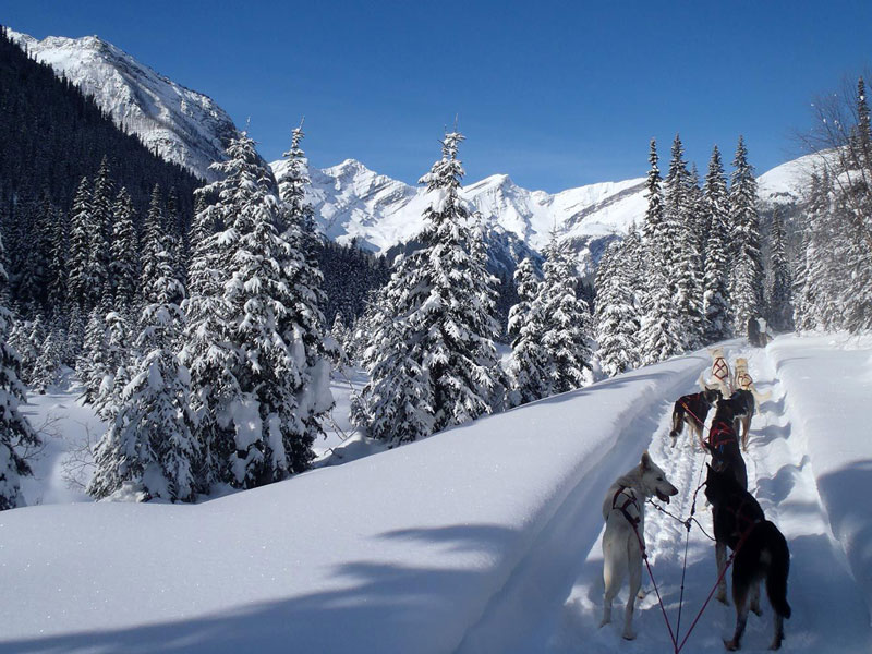 Luxury Snow Train to the Canadian Rockies | Jasper Dog Sledding