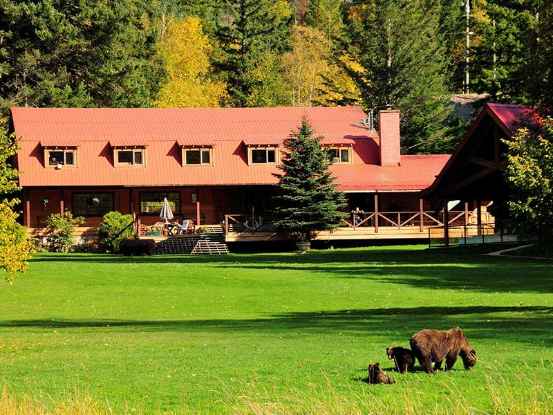 Grizzly Bears at Tweedsmuir Park Lodge