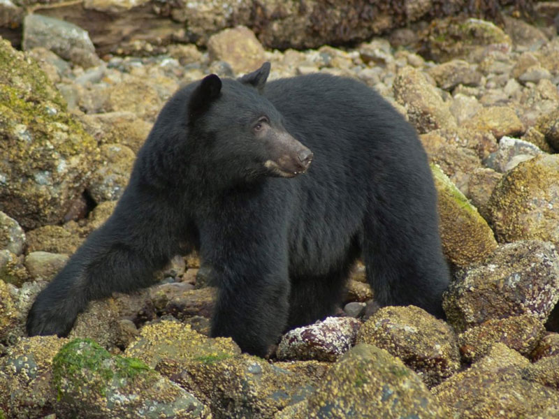 Whistler and Canada's Pacific Coast Road Trip | Tofino Bear Viewing