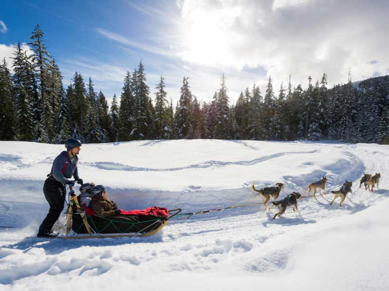 Whistler Winter Vacation | Ultimate Winter Playground | Dog Sledding